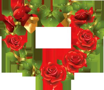 роса на розах